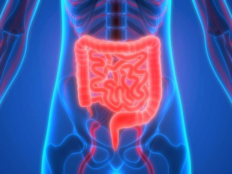 New cytokine network can repair tissue damage in the intestine, study finds