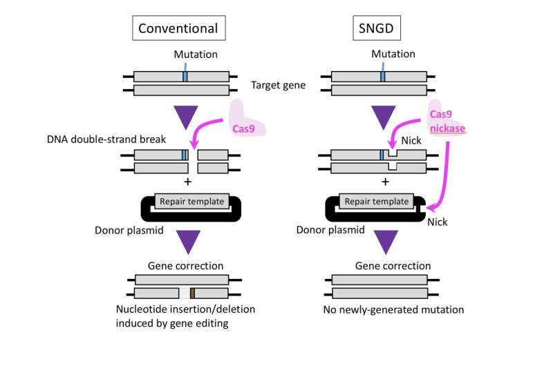 """New genome-editing method """"cuts back"""" on unwanted genetic mutations"""