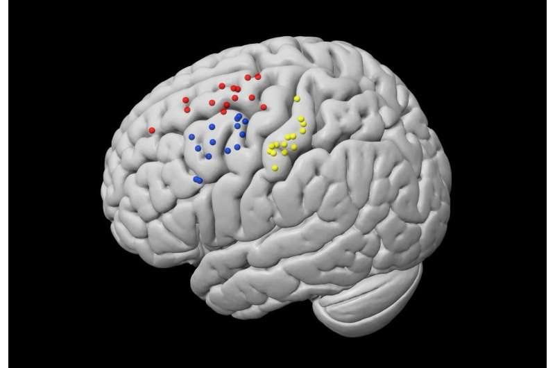 New information on brain areas linked to tactile sense and metacognit&