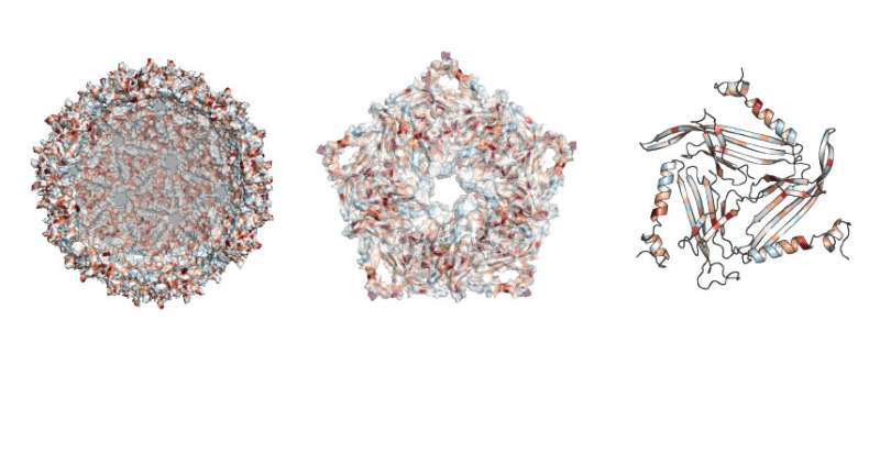 New methodology helps study of promising targeted drug delivery scaffold
