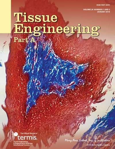 New molecular probes to allow non-destructive analysis of bioengineered cartilage