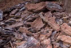 New process for full use of softwood bark ready for production