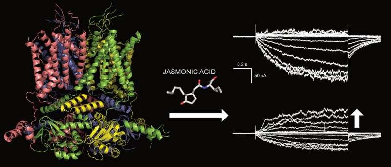 News about a plant hormone