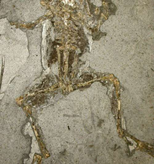 New sources of melanin pigment shake up ideas about fossil animals' colour