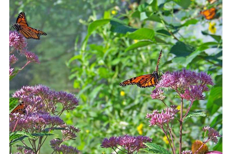 New tool to identify endangered ecosystems
