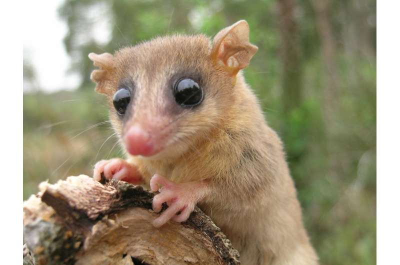 Ninety-six scientists co-author paper on rainforest mammals