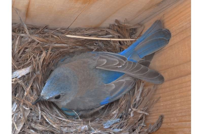 Noise pollution causes chronic stress in birds, with health consequences for young