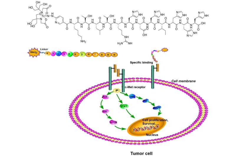 Novel tracer developed for precision targeting of non-small cell lung cancer