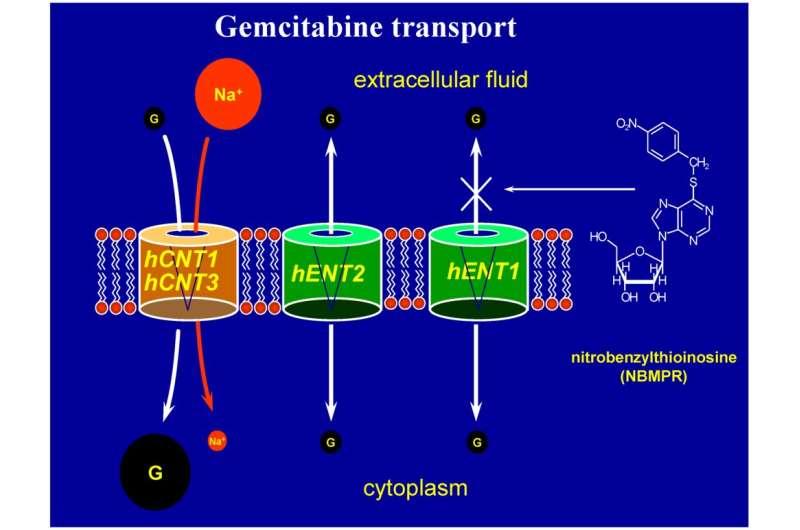 Nucleoside logic: Supply-side programming of the immune biocomputer