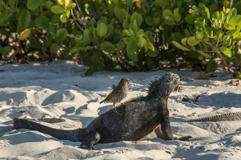 Officials at Ecuador's Galapagos National Park say they have collected 22 tonnes of garbage since January off the coasts of the