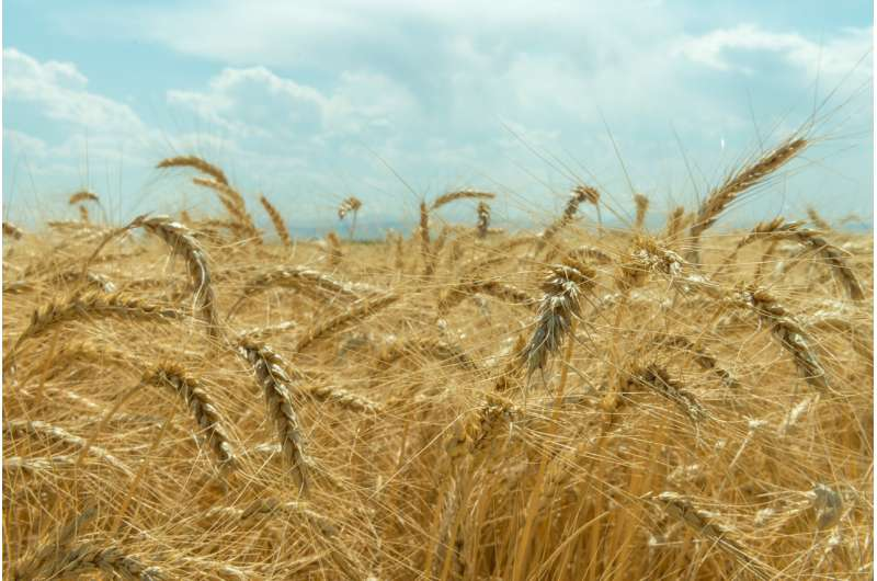 On the origins of agriculture, researchers uncover new clues