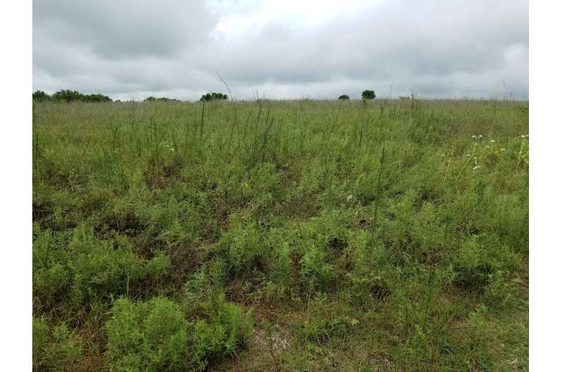 OU study shows effects of climate warming in tallgrass prairie ecosystem