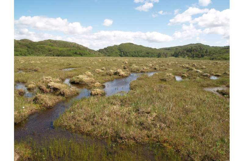 Peatlands will store more carbon as planet warms