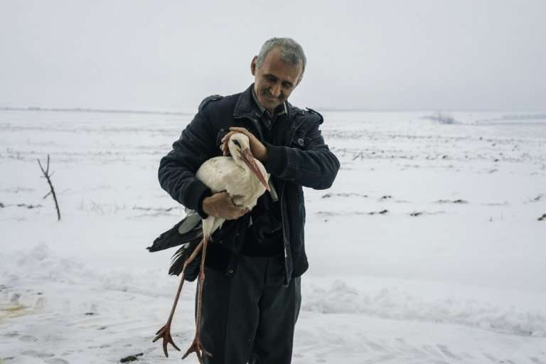 People in Bulgaria have been helping distressed storks during a cold snap