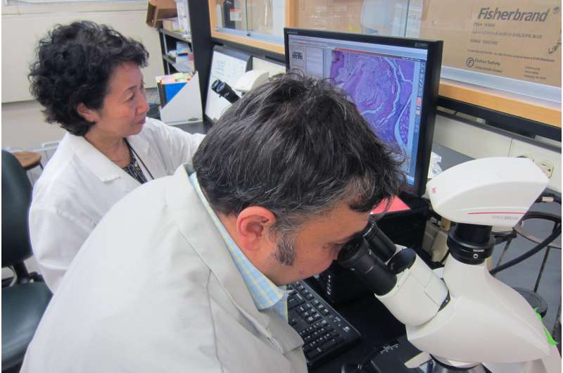 Periodontal disease bacteria may kick-start Alzheimer's