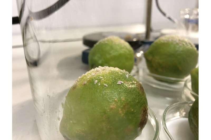 Pheromone power -- Bringing 'SexyPlant' back to defy crop pests