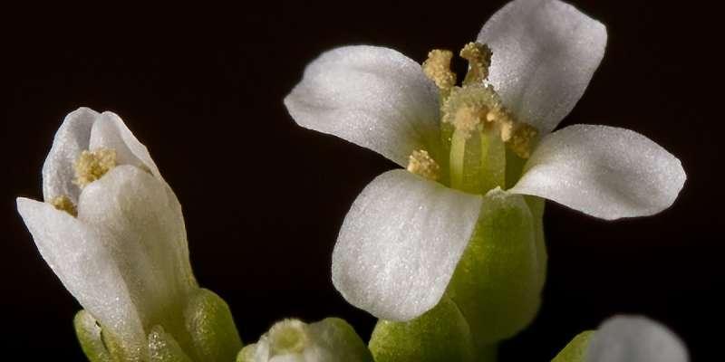 Plant defense mechanisms