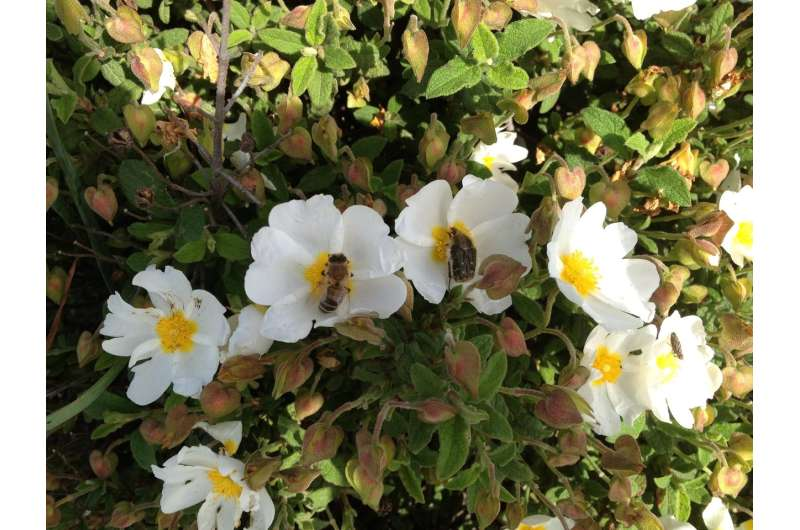 Plants use advertising-like strategies to attract bees with colour and scent