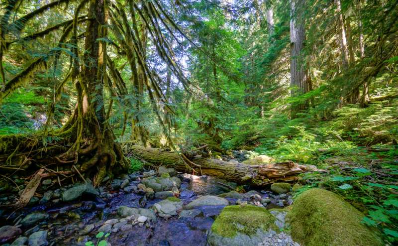 PNW woodlands will be less vulnerable to drought, fire than Rocky Mountain, Sierra forests