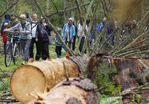 Poland ready to end extensive logging in pristine old forest