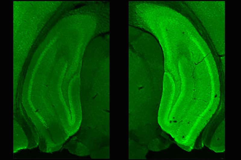 Protein pair quickly makes memories of new places