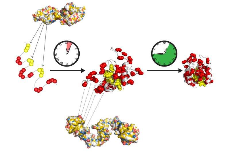 **Publication in Molecular Cell