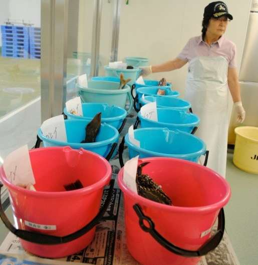"""""""When we catch fish and send it to market in Tokyo, some people don't want to buy it,"""" said Kazunori Yoshida, director"""