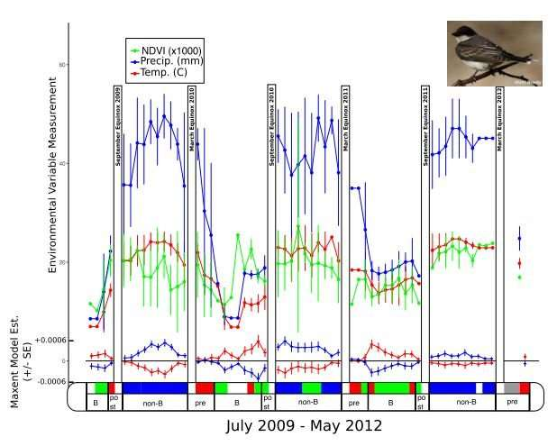 Rainy weather predicts bird distribution -- but climate change could disrupt it