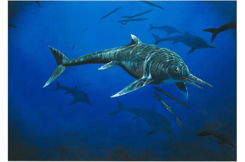 Rare ichthyosaur is only second known example
