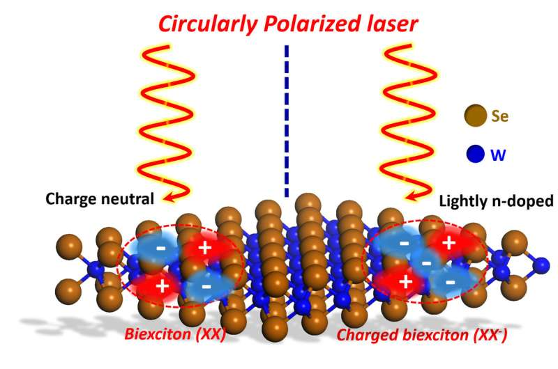 Research on light-matter interaction could improve electronic and optoelectronic devices
