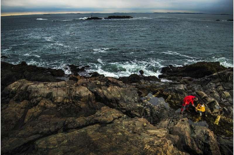 Robotic mussels provide data on intertidal bed refugia