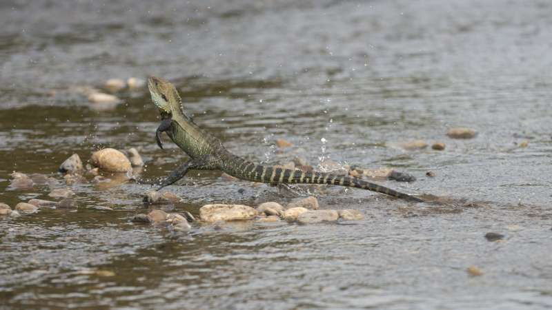Robots may need lizard-like tails for 'off-road' travel