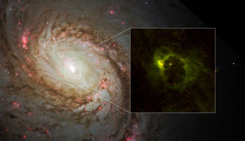Rotating gaseous donut around an active supermassive black hole