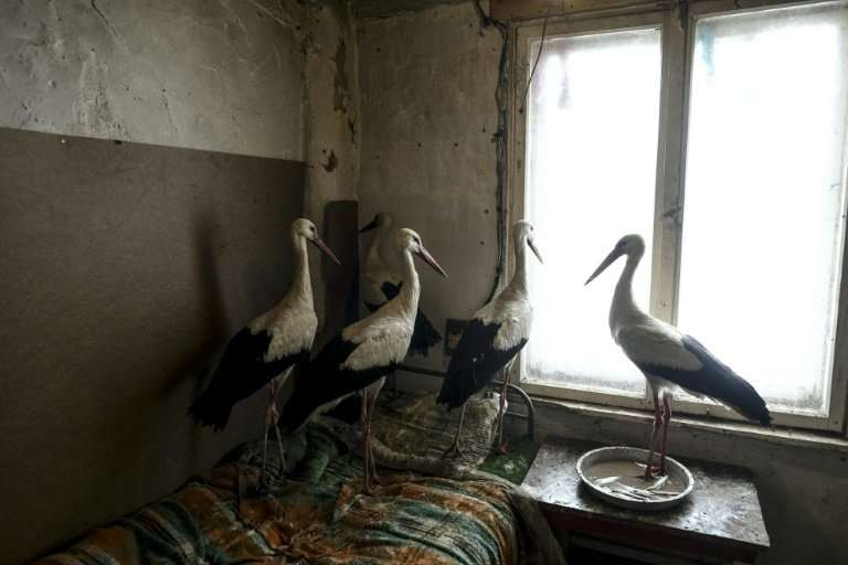 Safet Halil has housed a number of storks he found suffering in the cold weather near his village of Zaritsa
