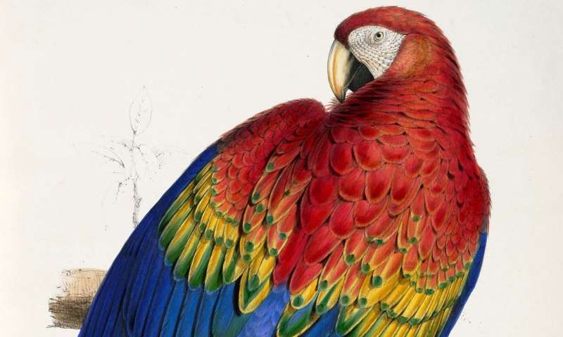 Scarlet macaw DNA points to ancient breeding operation in Southwest