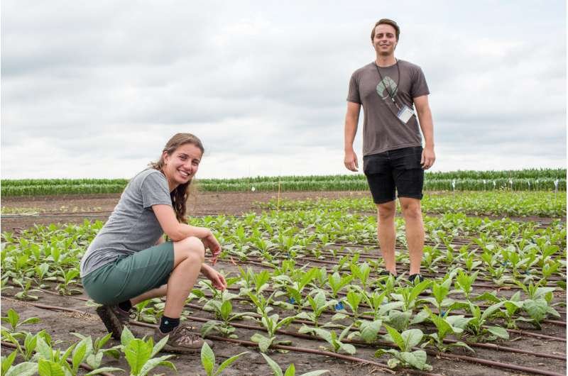 Scientists boost crop production by 47 percent by speeding up photorespiration