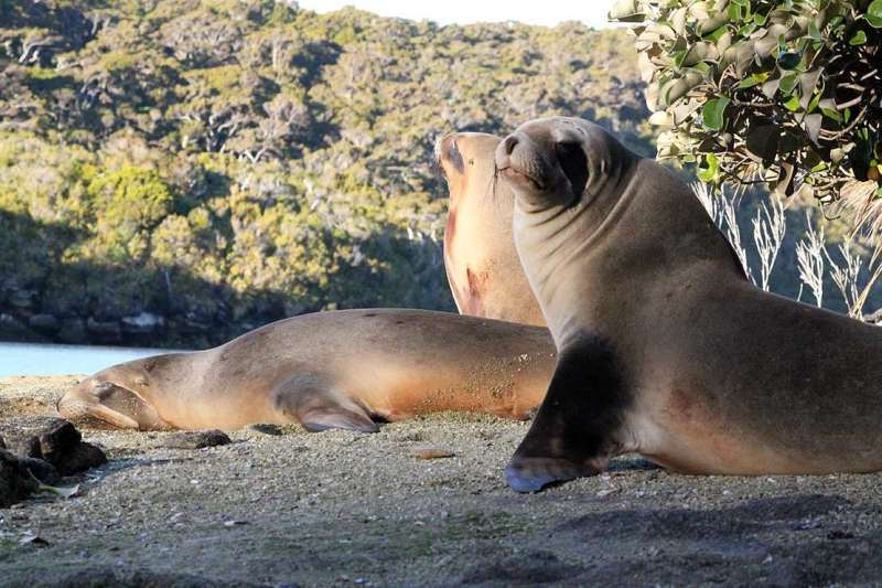 Sea lion colony confirmed, but work still needed