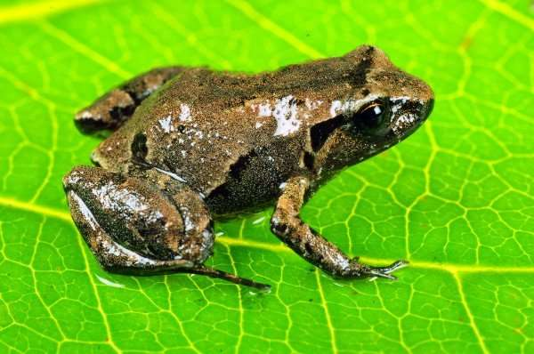 Search for vanishing frogs leads to discovery of new species