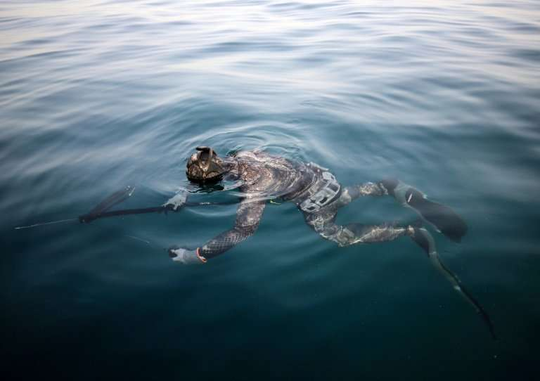 Several times a year, as egg-laying approaches for different species, the freedivers invite fishermen to awareness sessions abou