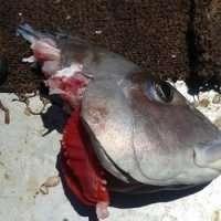 Shark bite-off rates revealed at Ningaloo