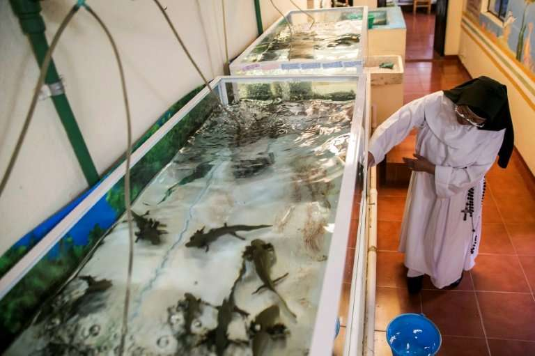 Sister Ofelia Morales Francisco is working to help save the endangered Lake Patzcuaro salamander, or Ambystoma dumerilii