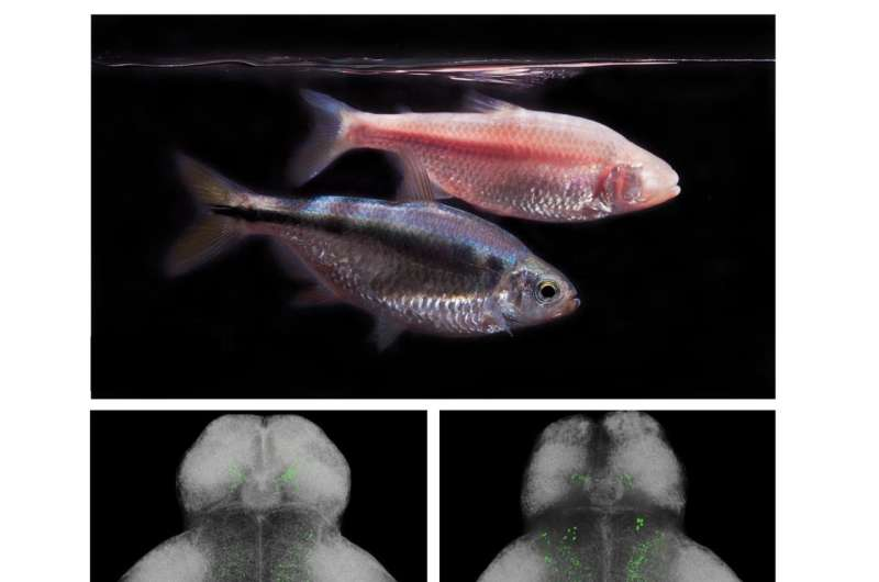 Sleepless in Latin America: Blind cavefish, extreme environments and insomnia