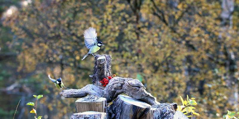 Small birds discern threat level of enemies