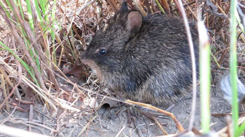 Small mammal thought to be extinct rediscovered in Nepal's national park