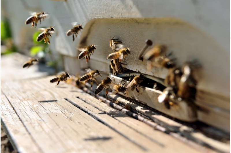 Some neonicotinoid pesticides are more toxic to bees than others; here's why