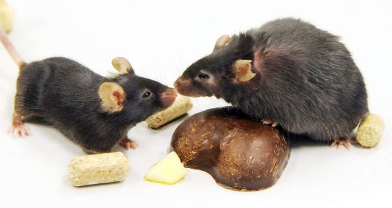 Sound changes the way rodents sense touch