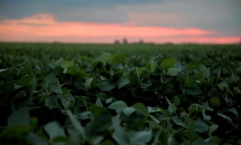 """Soybean fields in Brazil and other South American countries are often fumigated with glyphosate, a herbicide which is """"prob"""