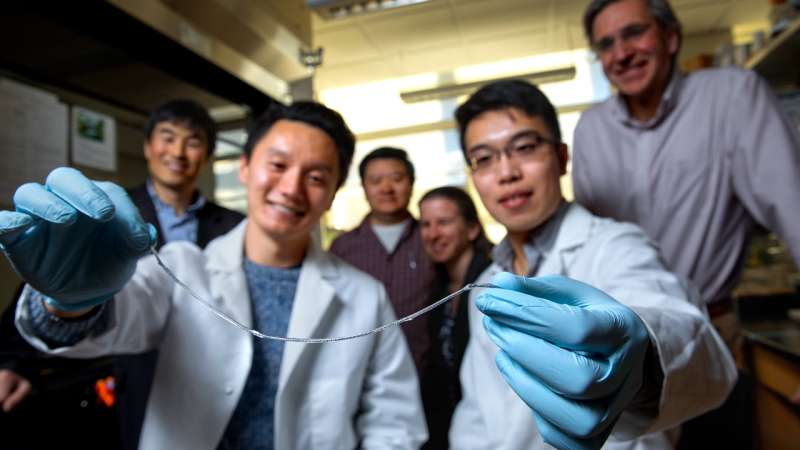 Spider's web inspires removable implant that may control type 1 diabetes