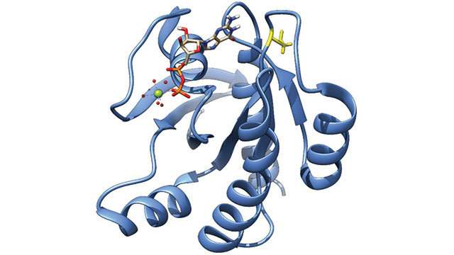 Study characterizes proteins resulting from RAS gene mutations, found in more than 20 percent of all human cancers