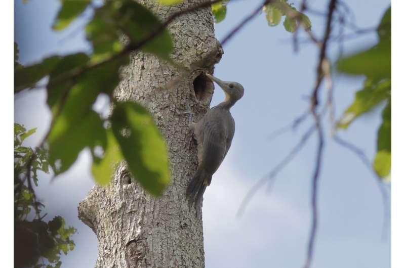 Study: Damning evidence of dam's impacts on rainforest birds